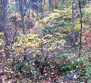 Dreisbach Family Eager to Secure Conservation Easement