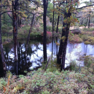 Maple Tract Preserve