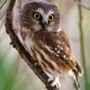 Wild in the Parks: Moonlight Owl Prowl