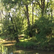 Making Conservation Happen on the Monocacy