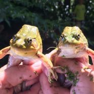 Party with the Frogs! – May 5