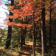 You & Me: Falling Leaves