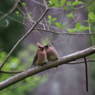 TNP Nature Treks: Birds & Bagels