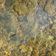 TNP PreK Pathfinders: Into the Creek