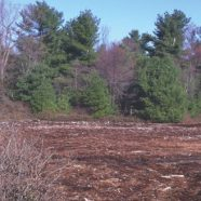 180 Protected Acres Expand Pocono Area Maple Tract Preserve