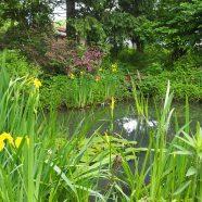 You & Me: Pond Hop