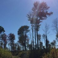 Get Out Lehigh Valley: Boardwalks & Bogs at Thomas Darling