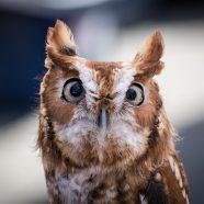 TNP PreK Pathfinders: Owl Pals