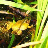 NORCO PreK Pathfinders: Frog Slog