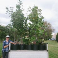 Volunteer Planting Day At The Emmaus Public Library