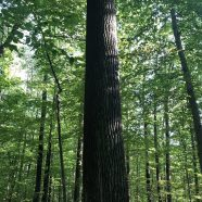 Get Out! Lehigh Valley: Big Trees at Jacobsburg State Park