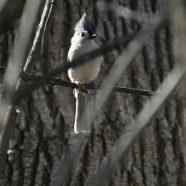 Wild in the Parks: Winter Wings Bird Walk