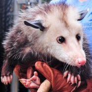 Wildlife of the Watershed: Mammals Meet & Greet