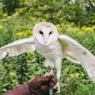 You & Me: Owl Pals