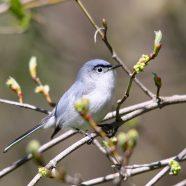 Backyard Birds Part 3: Landscaping for Birds!