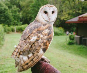 Wildlife Of The Watershed: Owls @ Dorothy Rider Pool Wildlife Sanctuary | Emmaus | Pennsylvania | United States