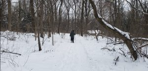 Snowshoe/Stroll with Your Sweetheart @ Dorothy Rider Pool Wildlife Sanctuary | Emmaus | Pennsylvania | United States
